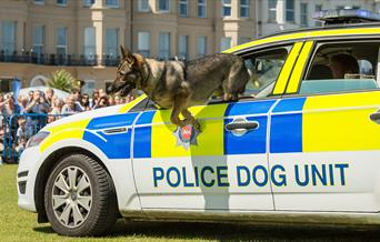 999 dog Photo by Graham Huntley